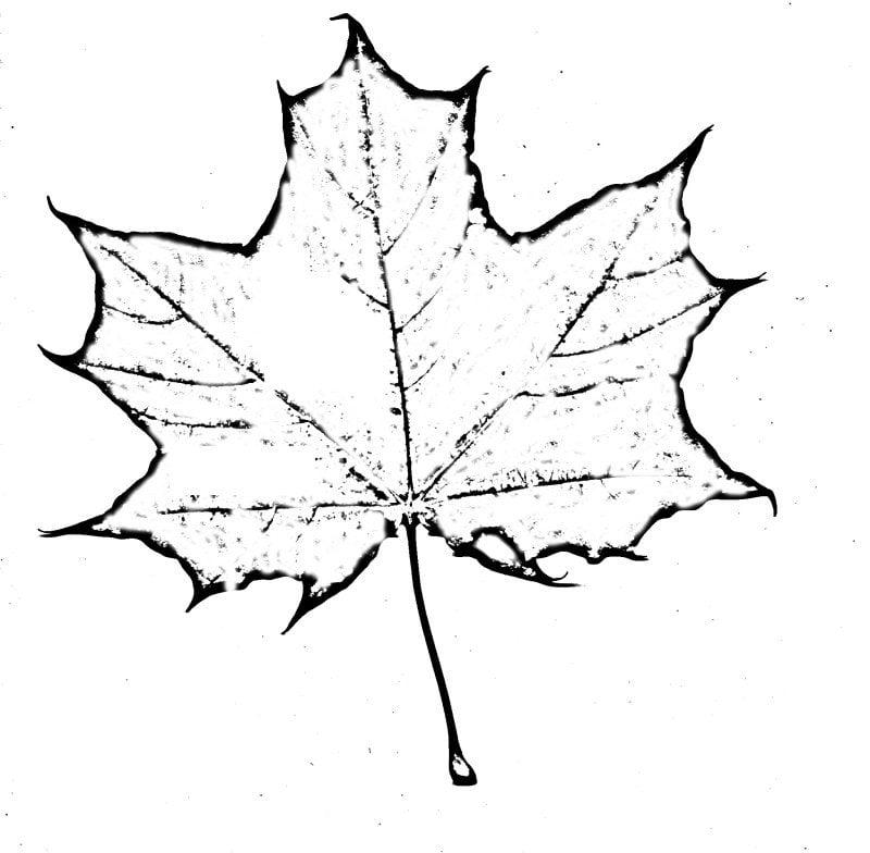 Листья осени картинки как нарисовать
