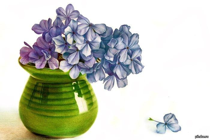 Папе стихами, картинки цветов в вазе для срисовки цветные