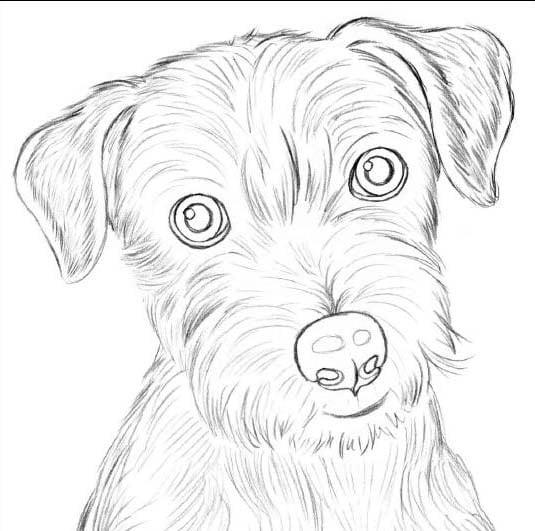 собаки рисунки фото