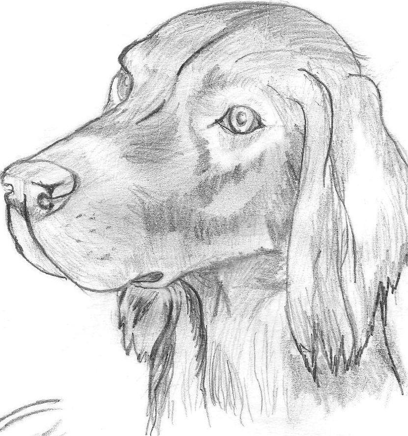Открытки, картинки собаки нарисованные карандашом легкие и красивые для срисовки