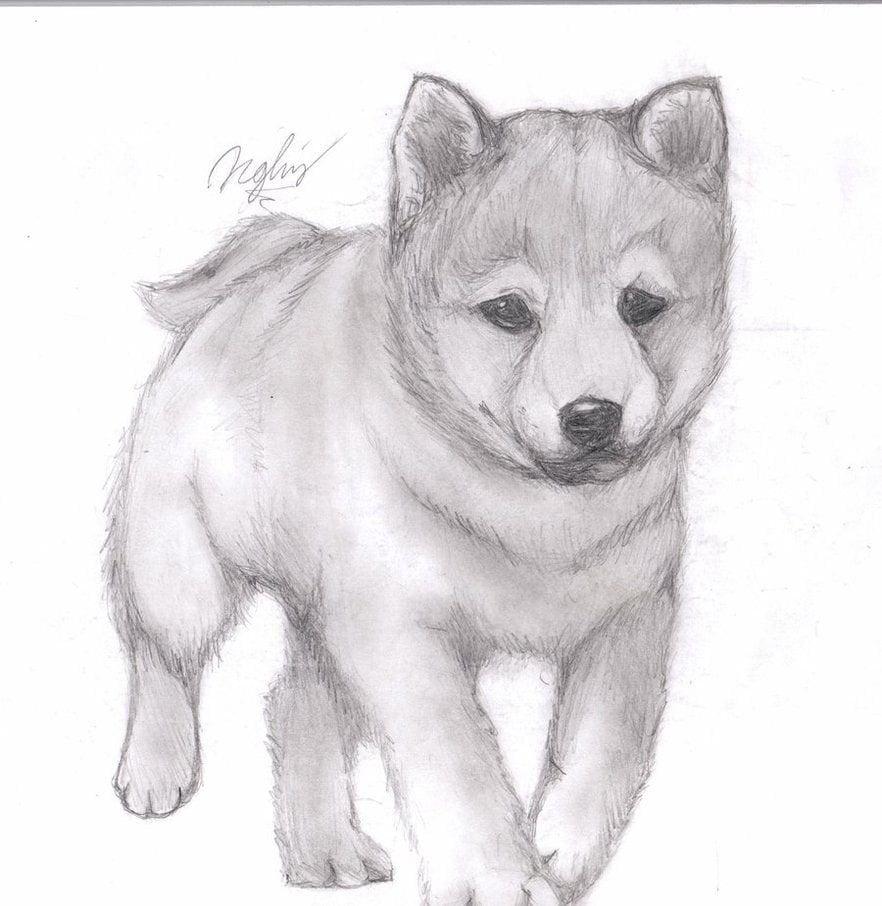 Рисунок животные карандашом, открытках пасхой