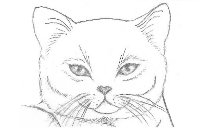 Картинки котов для срисовки карандашом для начинающих, днем