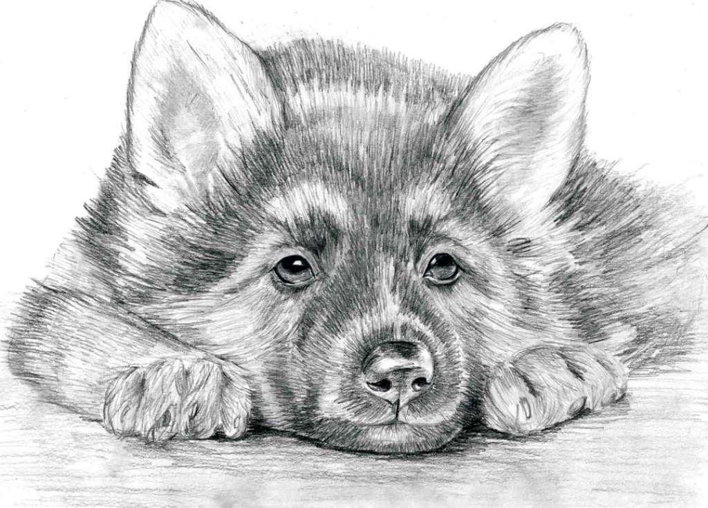 Картинки для срисовки карандашом животных красивые