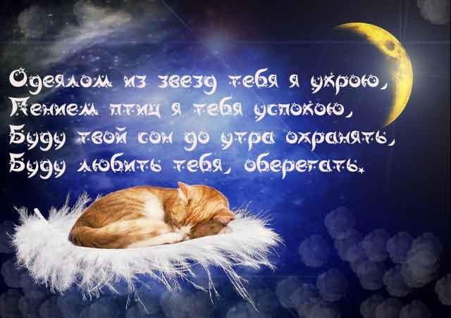 Пожелание сладких снов любимому открытка, картинки животными
