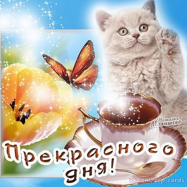 пожелание доброго удачного дня мужчине открытки пользуется