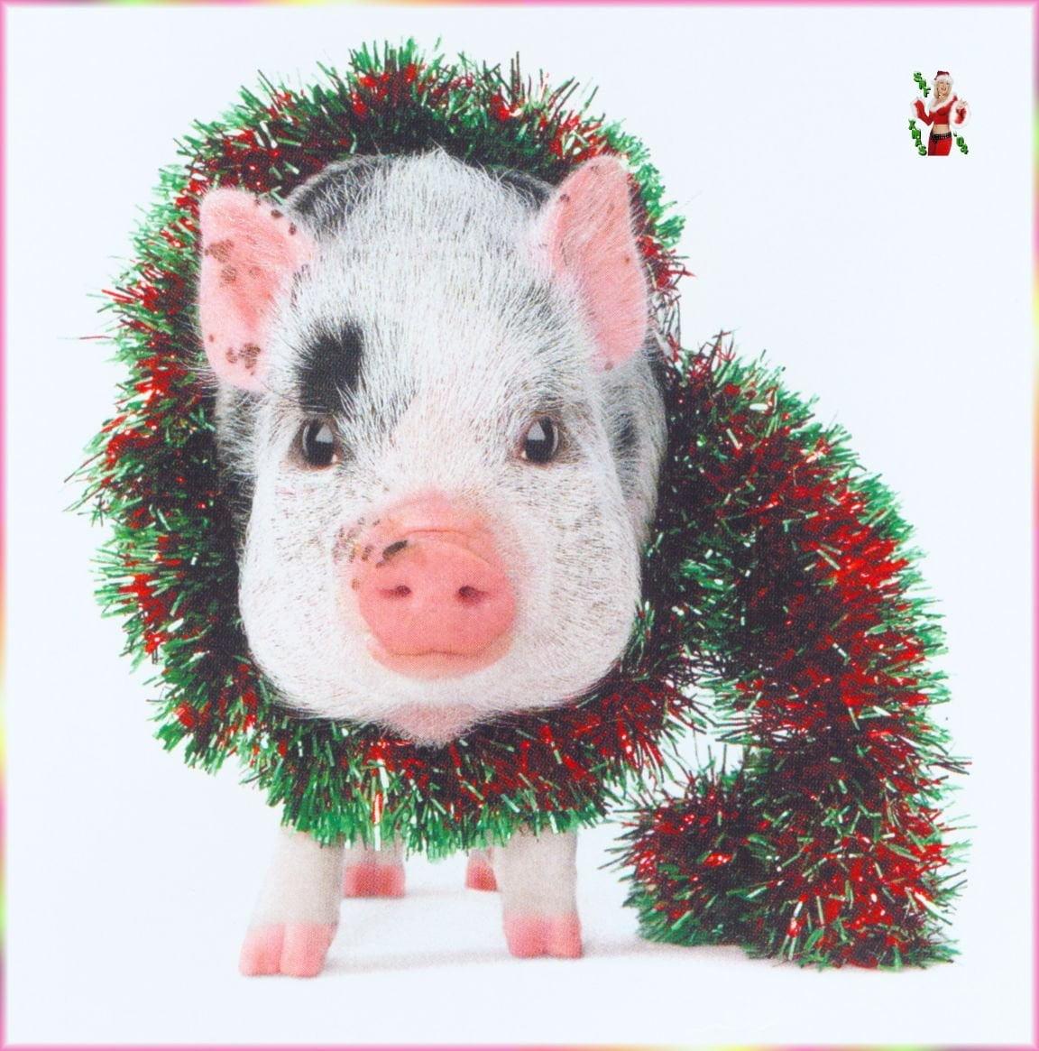 Новогодняя свинюшка картинки