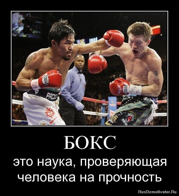 Прикольные картинки о боксе