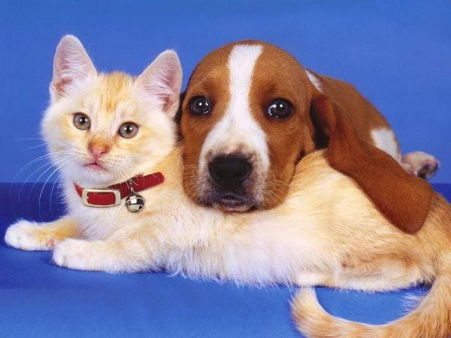 Прикольные и красивые картинки собак и кошек (34 фото ...