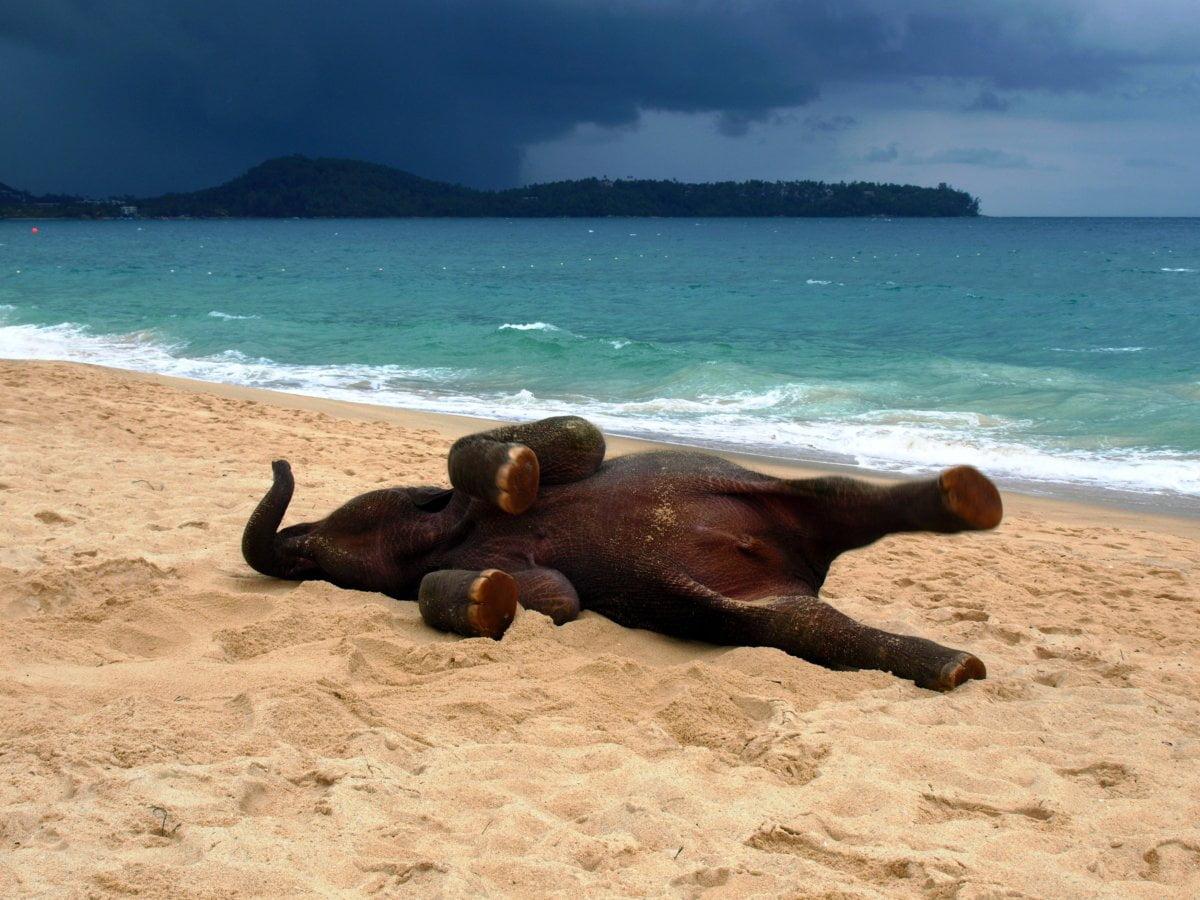 картинки про пляж смешные