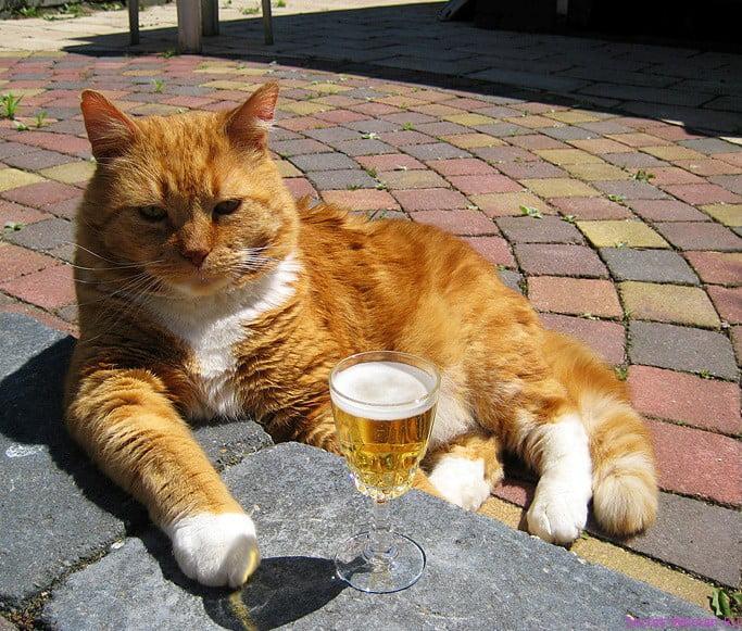 Прикольные картинки котов и кошек с надписями (24 фото) • Прикольные  картинки и позитив