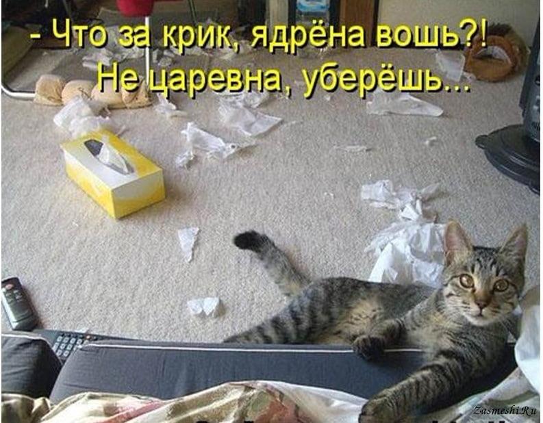 Картинки про котов прикольные с надписью смешные