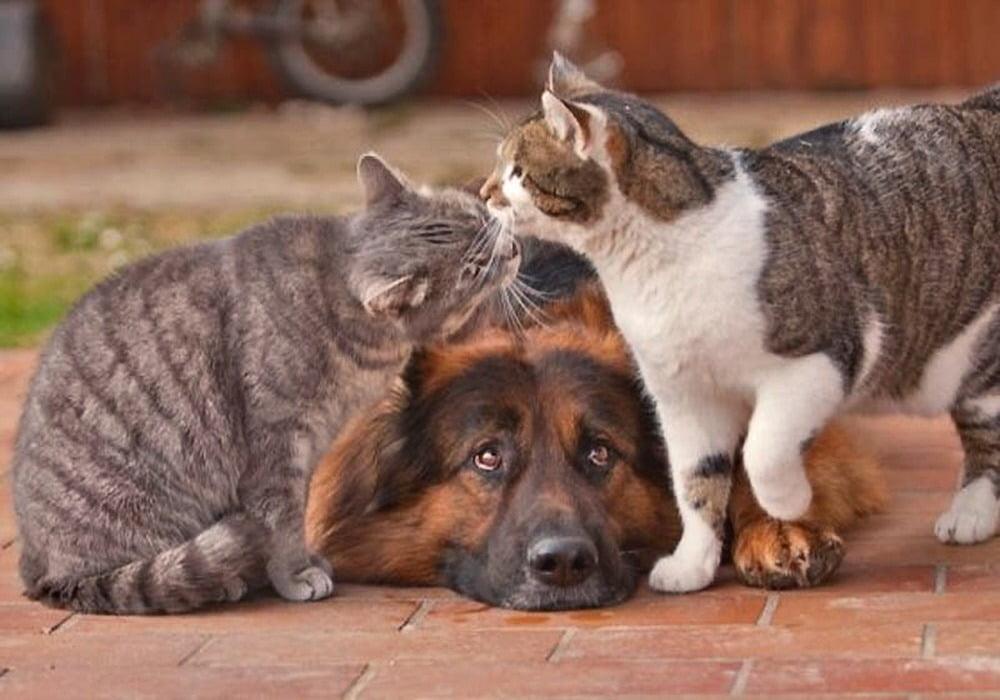 Смешные фото котов и кошек - | 700x1000