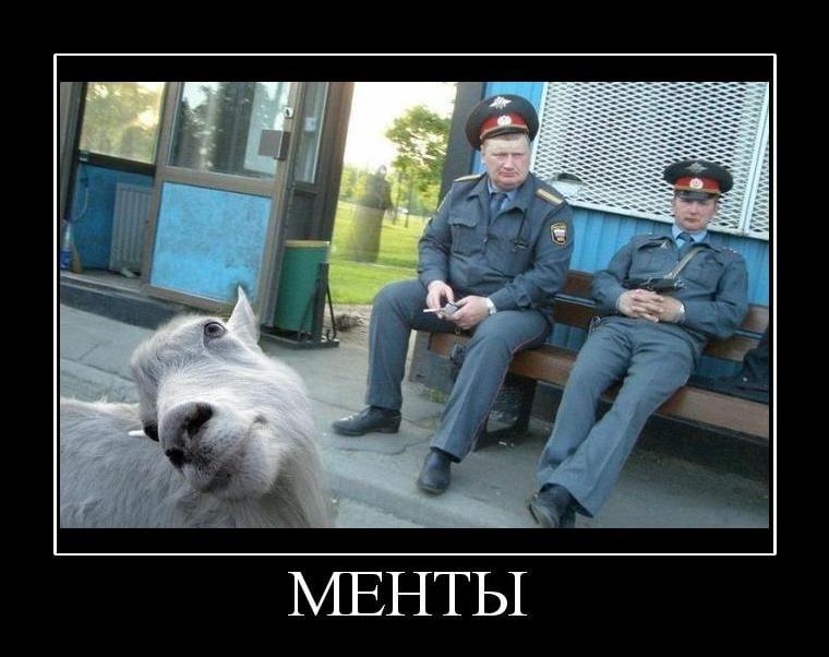 Волк картинки, смешные картинки с надписями про ментов