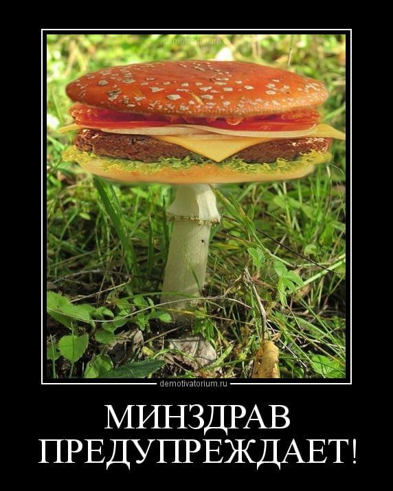 Картинки, грибы картинки приколы