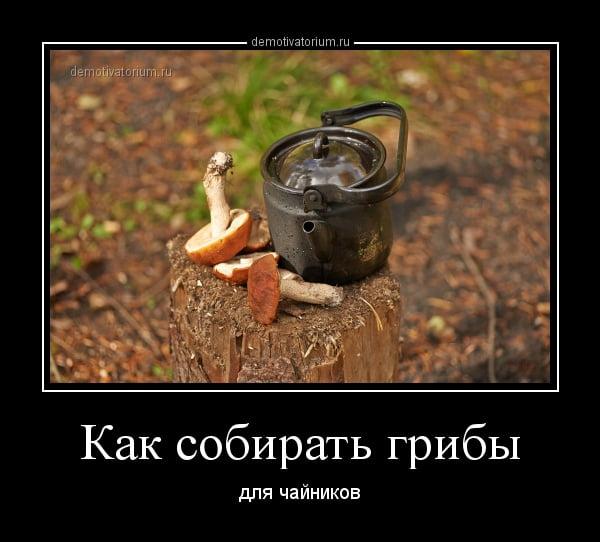 Прикольные картинки с надписями грибы, праздников россии картинки