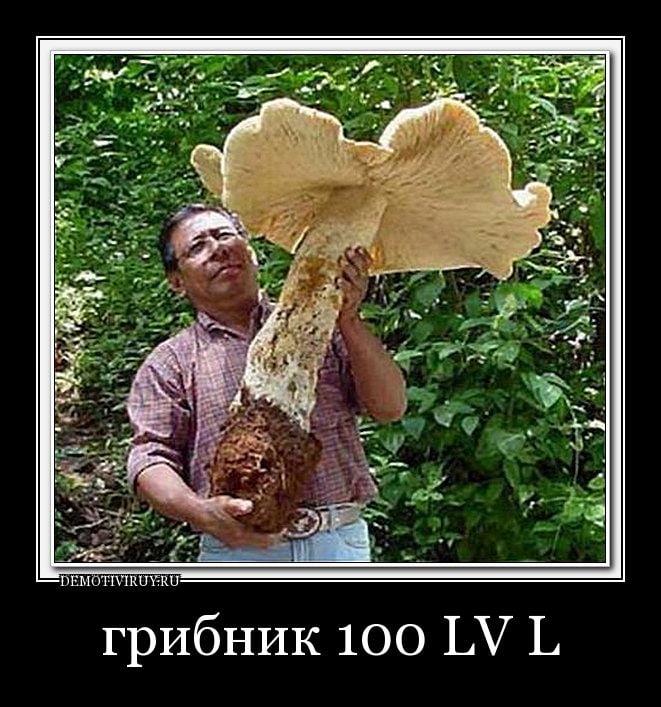 Днем рождения, смешные картинки грибов нет