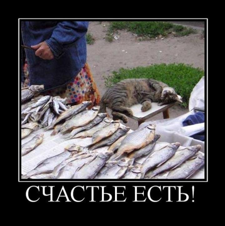 на рыбалку едим картинки