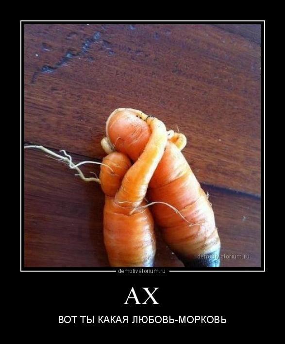 Любовь морковь картинки смешные, открытки