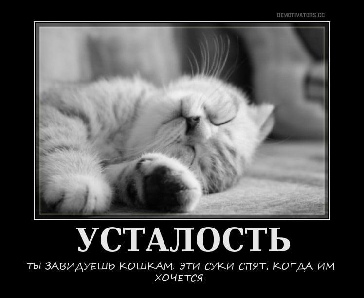 Днем, смешные картинки от усталости с надписями
