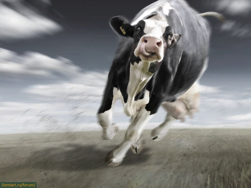 Картинка с летающей коровой