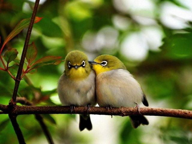 Картинки по запросу фото две птички на дереве чиривают
