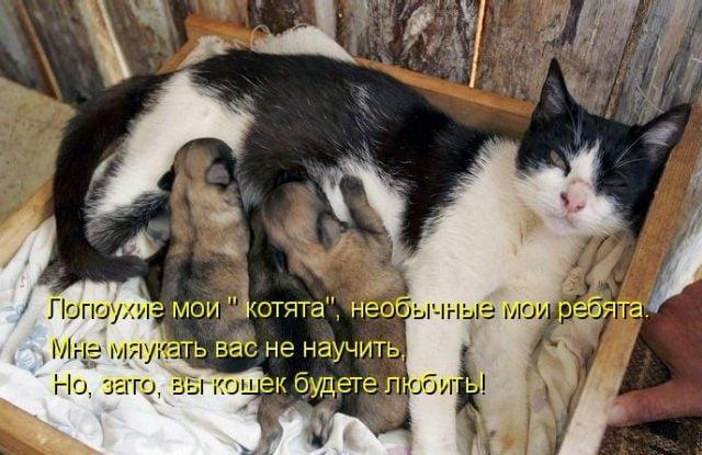 Беременным отказывать нельзя картинка с кошкой с надписью, открыток для форумов