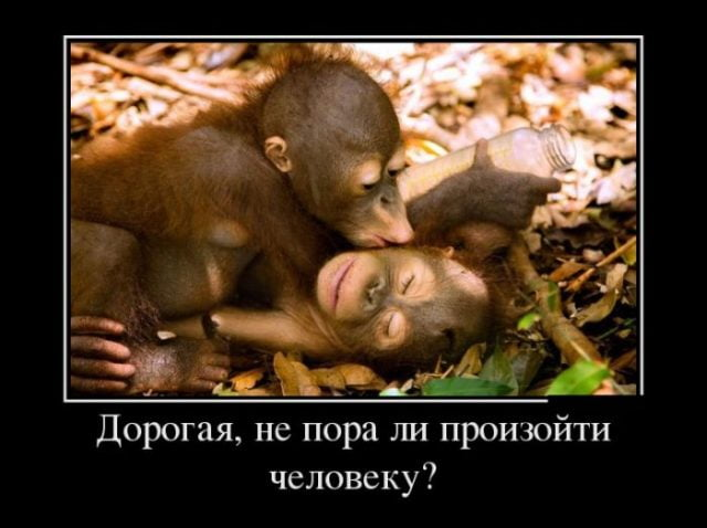 Смешные картинки с надписями про мужчин и животных, маша
