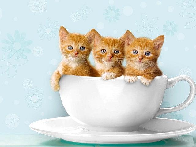 Котики - прикольные картинки (30 фото) • Прикольные картинки и позитив
