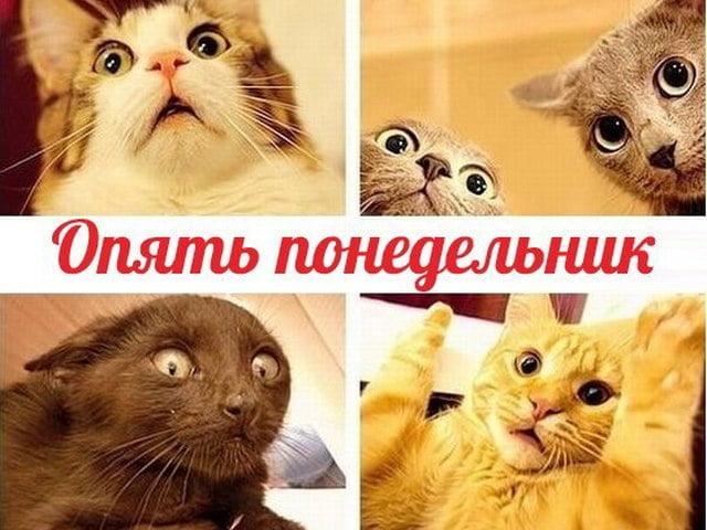 Смешные картинки про понедельник с надписями и работу, анекдоты картинки