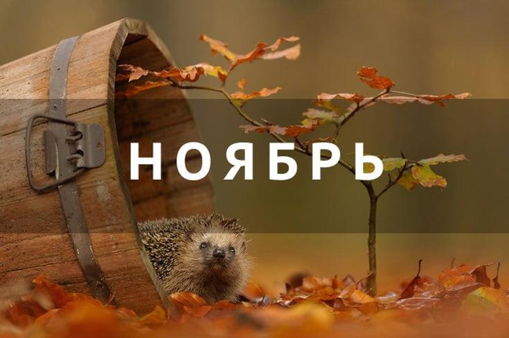 Ноябрь картинки с надписями прикольные