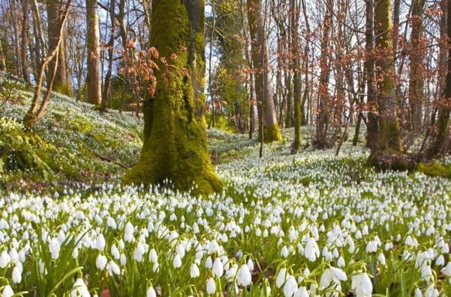Весна фото пейзажи