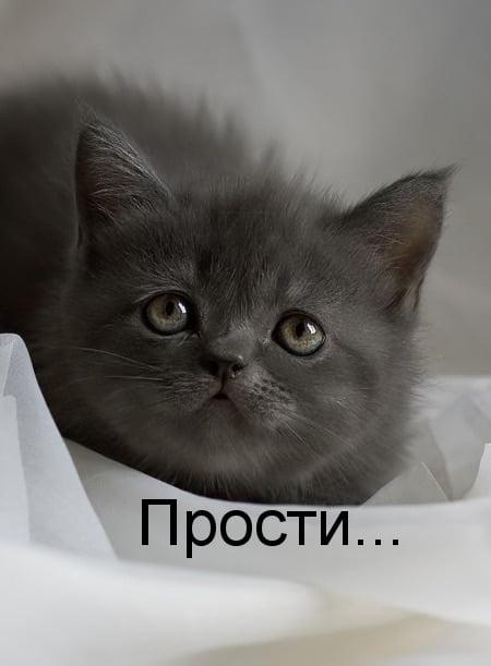 Картинки прости меня котик, картинки