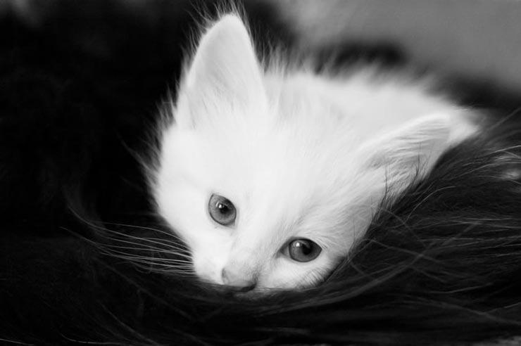 использовать открытки грустные котята мире принято считать