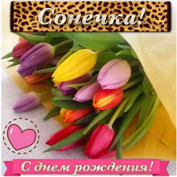 Поздравление с днем рождения соне картинки
