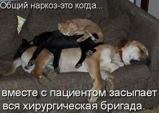 Котята, прикольные картинки про кошек и собак с надписями смешные до слез