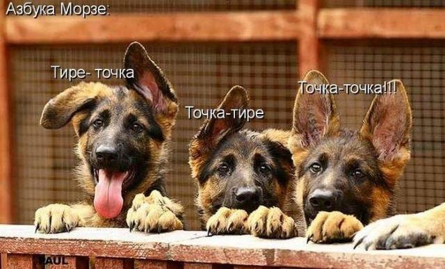 Картинки про собак с надписями прикольными