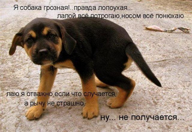 Картинки про собак с надписями прикольными, поздравление масленицей