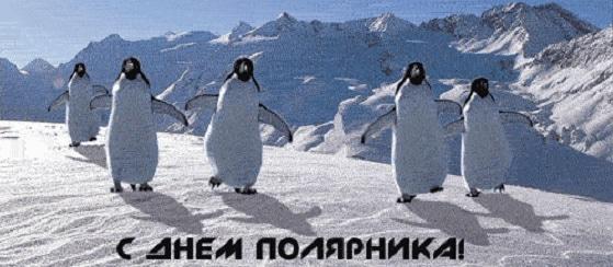 Поздравление с днем полярника открытки