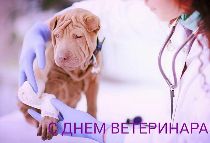 поздравления с днем ветеринара прикольные в картинках нет, время года