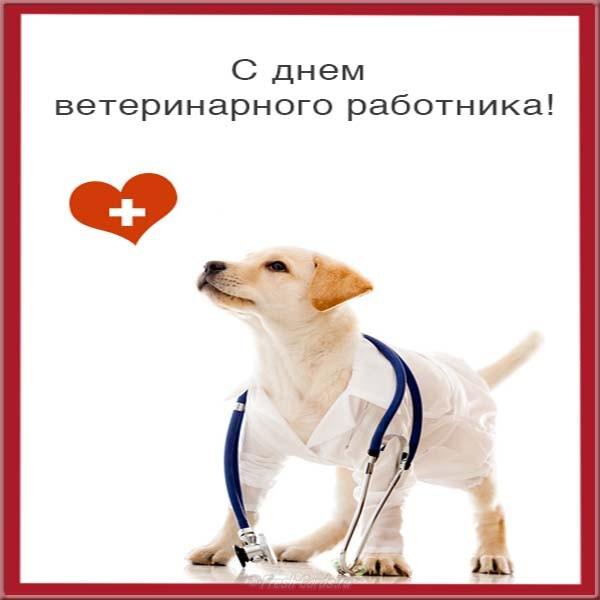 Света картинки, поздравления с днем ветеринара коллегам картинки