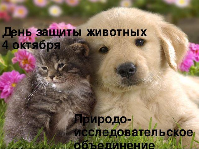 Собаками новый, открытки защита животных