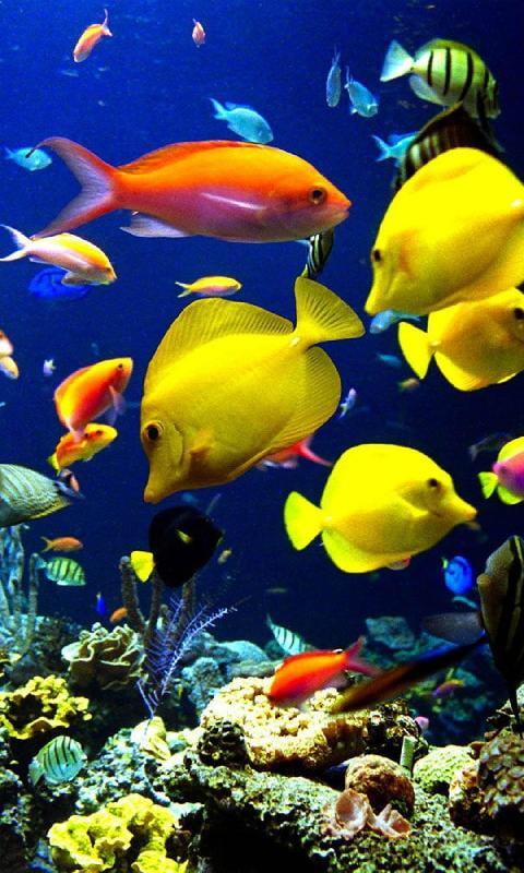Аквариумные рыбки картинки на телефон главным