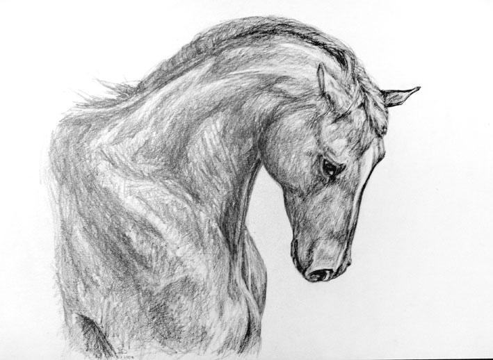 Заготовке, крутые картинки лошадей для срисовки