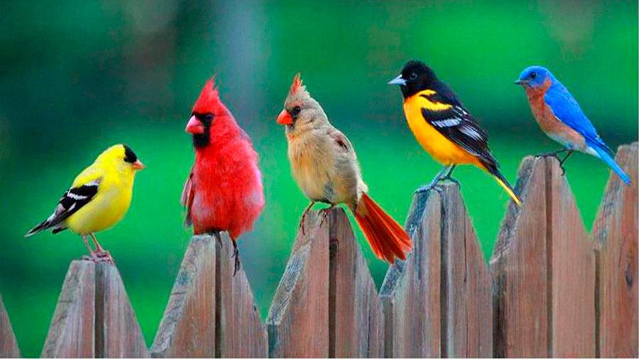 Колибри - самые маленькие птицы на земле, но какие
