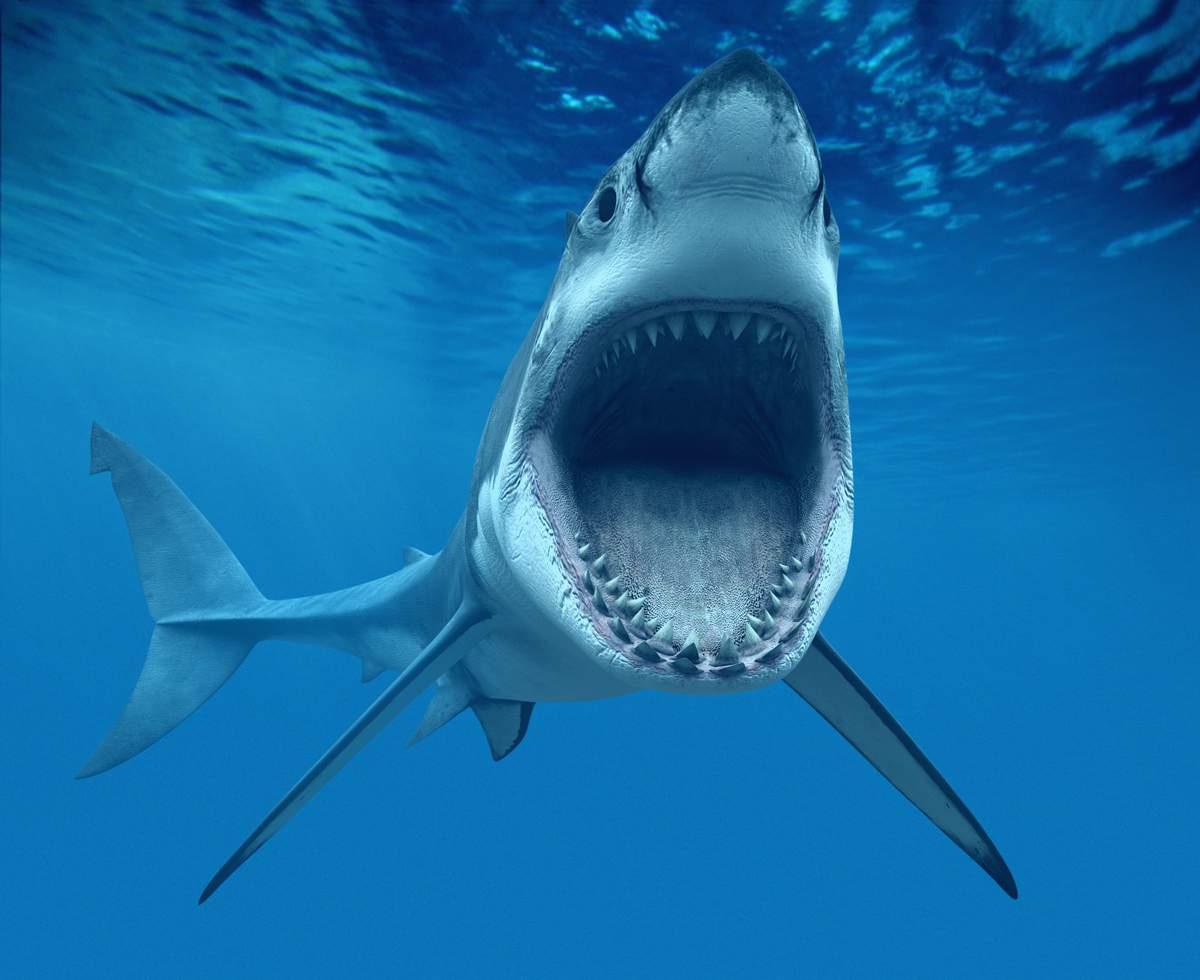 обвиняется совершении акулы смотреть фото началось все из-за