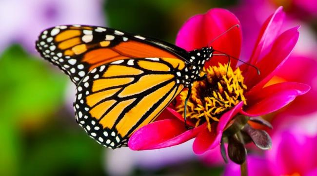 Бабочки - красивые картинки (50 фото) • Прикольные картинки и позитив