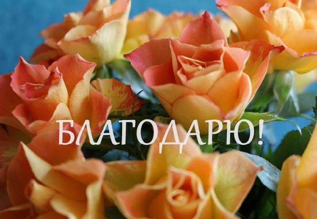 132 карточки в коллекции «Лебеди» пользователя N в Яндекс
