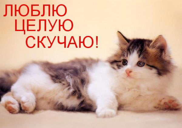 Русском ураза, картинки жду люблю целую