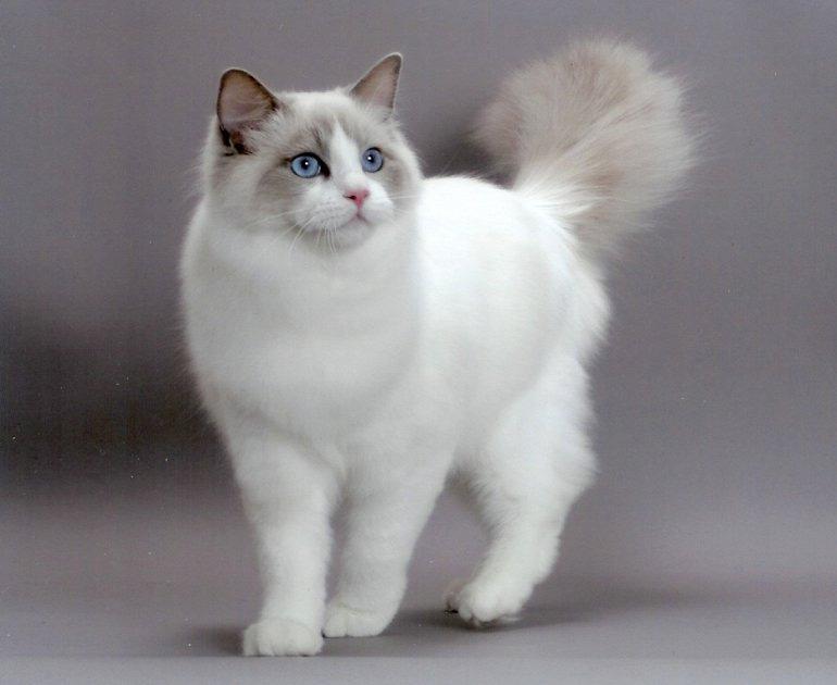 очень красивые коты мира фото блюдо