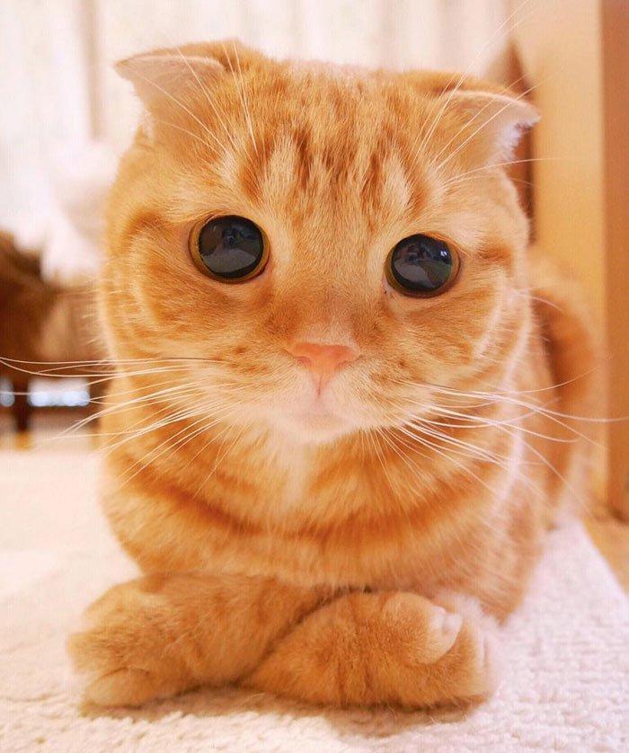 картинки котов самые красивые ооо гепард-с телефон